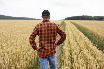 A farmer stands in a wheat field and inspects it before harvest. Agricultural industry