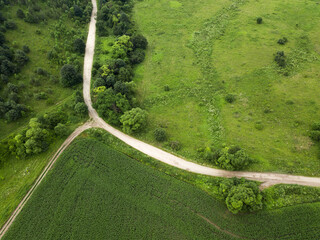 Top view of a large green corn field and a country road. Rural landscapes