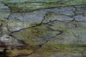 Abstract natural line pattern of wood from  a dead tree