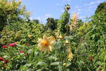 Sommergarten - Garten Sommer