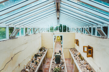Interior of a greenhouse for the cultivation of decorative cacti.