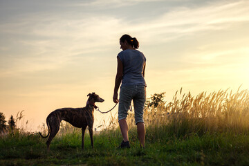 Woman walking with her dog during sunset at summer. Pet owner with greyhound enjoying walk outdoors