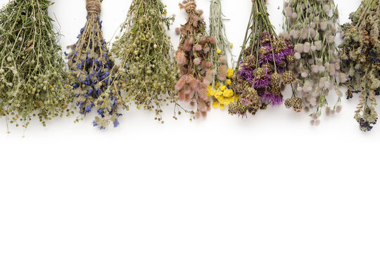 Row of medicinal herbs bunches on white background. Top view, flat lay. Alternative medicine. Copy space for text.