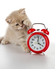 Kitten with Alarm Clock