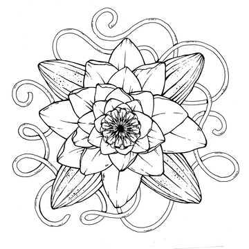 Beautiful white water lily for tattoo or t-shirt design. Symbol of purity, integrity and holiness. Symbol of calmness, serenity and beauty. Element of water.Tattoo for chest, back, lower back