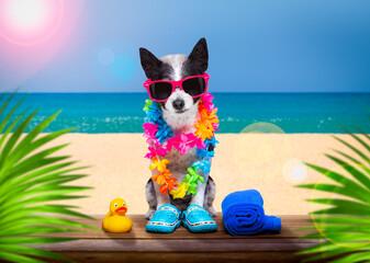 Foto op Plexiglas Crazy dog dog on summer holiday vacation a the beach club bar