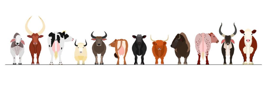 various cattle border