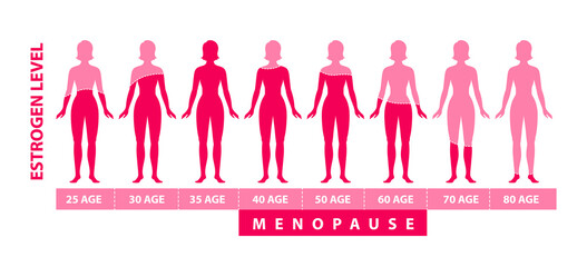 Estrogen harmone level. Graphic diagram with women body silhouette, harmone level and age data.