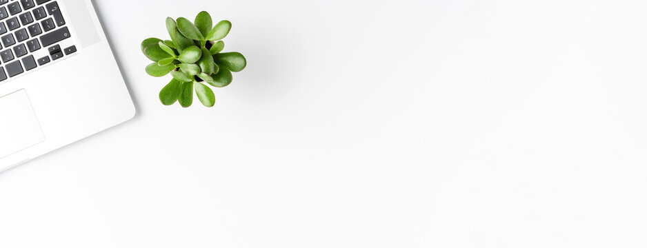 Business concept with laptop and small succulent isolated on white background. Office desktop. Banner