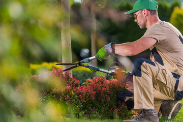 Garden Decorative Trees Trimming by Professional Gardener