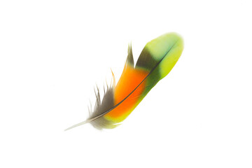Wall Mural - Beautiful colorful parrot feather isolated on white background