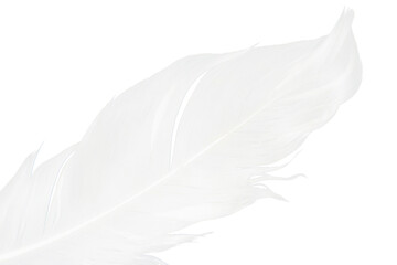 Wall Mural - Beautiful white feather floating isolated on white background