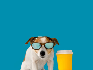 Cute jack russell dog in sunglasses and a paper cup isolated on blue background