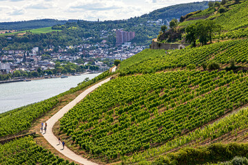 Famous Vineyards slopping down to a medieval village of Rudesheim am Rhein, State of Hesse, Germany