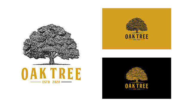 Oak tree logo design vector or hand drawn isolated