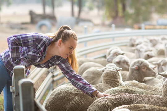 Young woman on farm with sheep