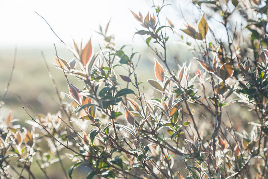 Dew spangled leaves outlined in silver light on a bush