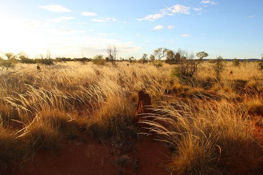 Northern Territory grasslands