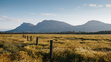 Flinders Ranges landscape with fence line and scrub in the afternoon sun