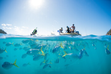 A split shot of snorkelers swimming with a school of tropical fish