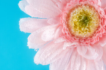 View of a daisy flower in soda water with bubbles. Summer concept. Close-up.