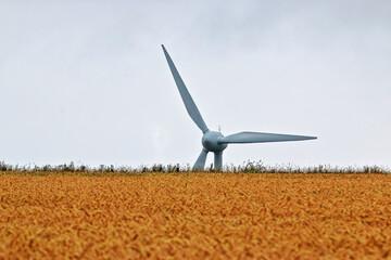 Windrad lugt über den Rand eines Kornfeldes in der Ferne