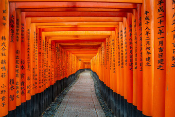 Kyoto, Japan - April 9,2017 : Thousand of red torii gates along walkway in fushimi inari taisha temple is Important Shinto shrine and located in Kyoto, Japan.