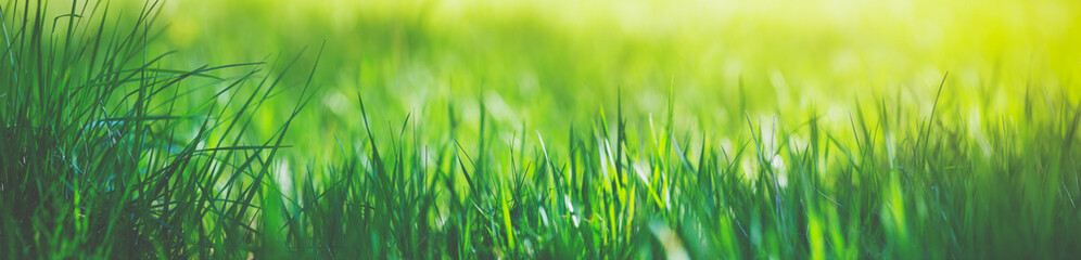 Wall Mural - Fresh green grass background with sunlight in summer