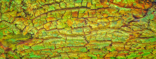 Fotobehang Brandhout textuur Nature background of texture tree bark in abstract colors.