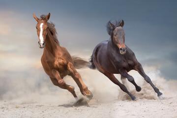 Wall Mural - Two beautiful horse run free in desert