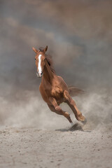 Wall Mural - Beautiful red horse running on desert storm