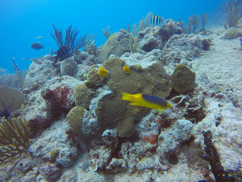 Sealife in clear Caribbean waters, one of the most beautiful places for diving and snorkel, Cozumel, Riviera Maya, Mexico