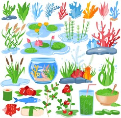 Seaweed water plants, algae vector illustration set. Cartoon flat underwater nature flora collection of sea, ocean or aquarium planting natural marine algae, aquatic kelp, fish coral isolated on white