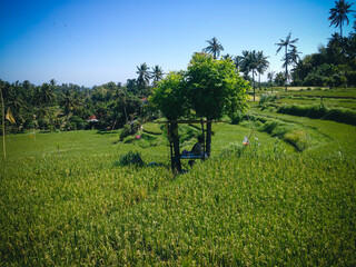 Peaceful Countryside Scenery In The Middle Of The Rice Fields At The Village, Ringdikit, North Bali, Indonesia