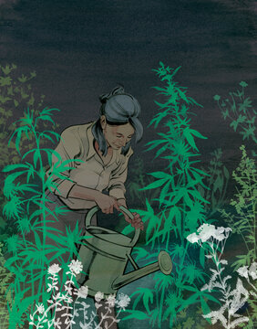 Illustration of woman watering marijuana plants in garden