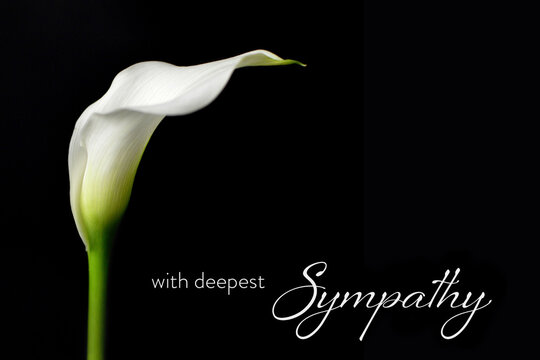 Sympathy card with white calla isolated on black background