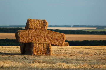 Bales of straw and stubbles on a harvested wheat field