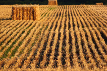 Bale of straw and stubbles on a harvested wheat field