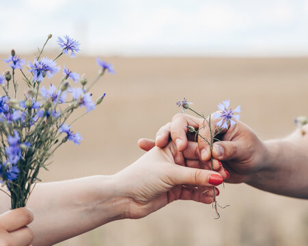 The man and woman hands, the guy holds out blue flowers to the girl, She is holding a bouquet in her hands, wheat landscape background