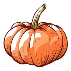 Pumpkin sketch. Halloween decoration element. Autumn farm harvest. Ingredient of Thanksgiving meals.