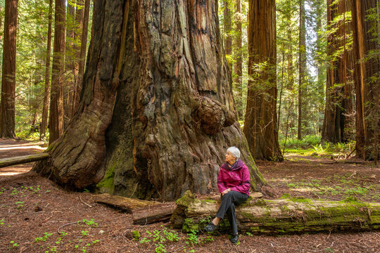 A woman in a red coat beside a giant redwood tree in a redwoo forest just north of Mendocino, CA