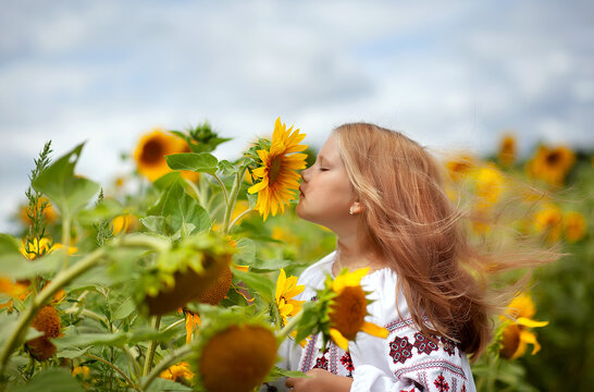 A beautiful girl in an embroidered shirt with fluttering hair sniffs a sunflower flower. Ukraine's Independence Day. Postcard, poster, calendar