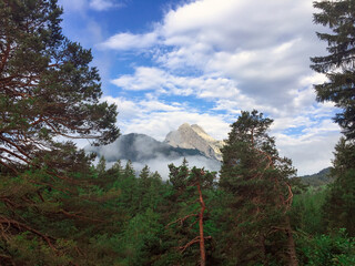 Foggy mountains and pine trees