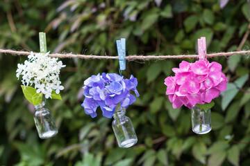 Hortensienblüten in Glasflaschen hängend an der Leine als Sommerdekoration