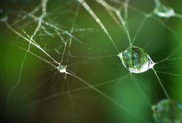 Kropla wody na pajęczynie - fototapety na wymiar