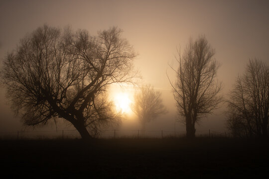 Mystische Silhouetten von Bäume, bei trauriger Stimmung im Nebel, bei Sonnenaufgang an einem Herbsttag.