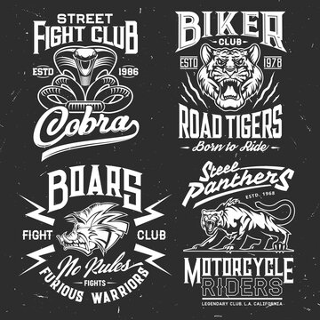 Tiger, cobra, panther and boar t-shirt print vector mockup of fight sport and biker club custom apparel template. Wild aggressive animal and attacking snake grunge badges with lettering