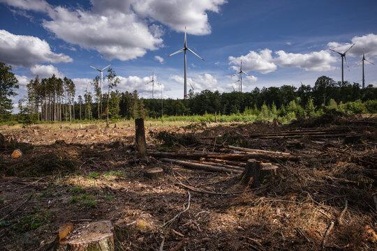 Spuren der Trockenheit im Wald