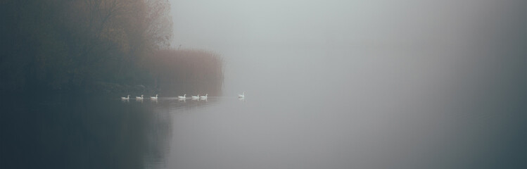 Silhouettes of geese sailing in fog on the lake in mist