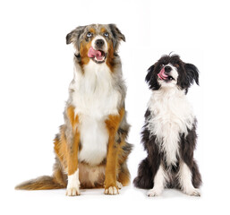 Two dogs isolated on white background
